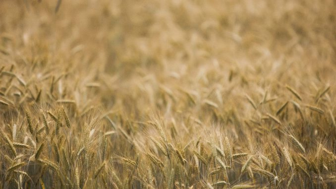 With COVID-19 shaking up markets, farmers are advised to sell part of their harvest at higher prices