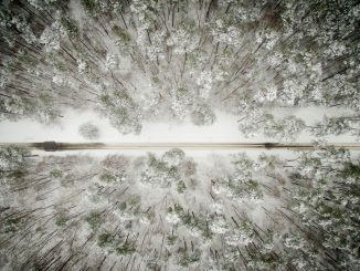 A forest road in Lithuania