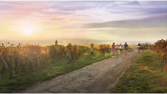 Outstanding landscapes and bicycle routes in Southern Moravia   Photo Courtesy of Czech Tourism