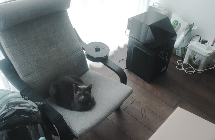 Giedrė's living room with the printer and the family's cat. Photo provided by Giedrė iii